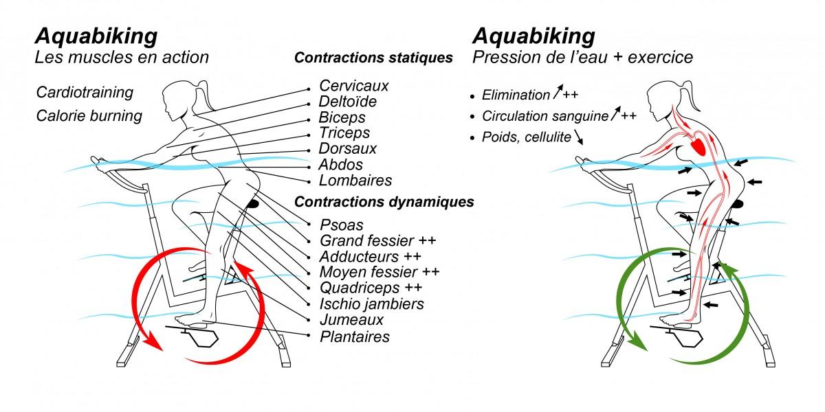 schéma - aquabike - vélo de pisicne - archimède