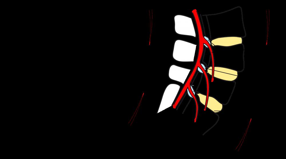 Welche Präparate bei die Rückenschmerz zu übernehmen